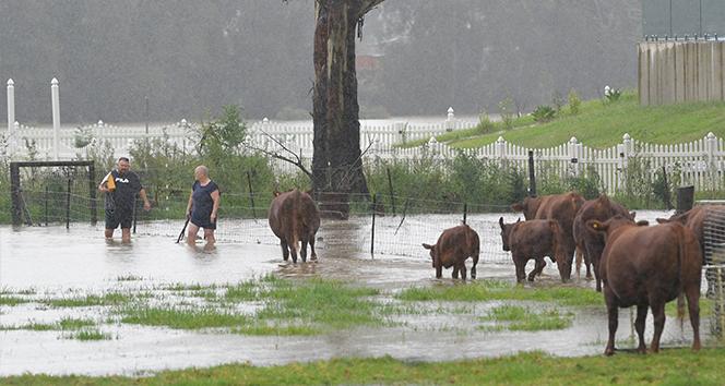 Avustralya'yı sel vurdu: 11 yerleşim birimi için tedbir amaçlı tahliye kararı