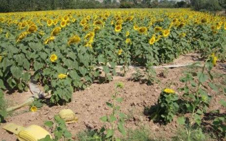 Tarım-GFE yıllık yüzde 18,52, aylık yüzde 1,96 arttı
